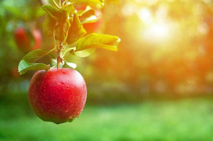 yağ yakan meyveler