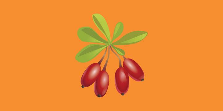 goji-berry
